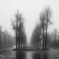 Туманный день :: shvlad