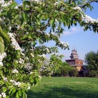 Весна в Коломенском :: Nikanor