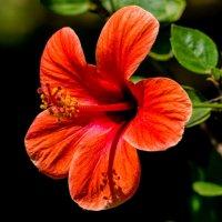 Цветок :: Witalij Loewin