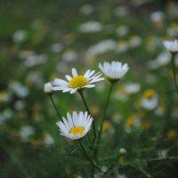 Весна :: Евгения Македонская