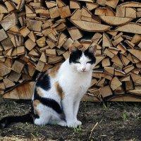 кошка :: Елена