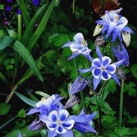 Цветы из сада Выдубицкого монастыря Фото №4 :: Владимир Бровко