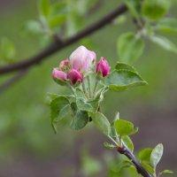 весна :: Анна Борисова
