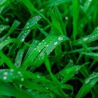 после дождичка в..воскресенье :: Яна Рудницкая
