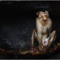 """Страдалец""...Открытый зоопарк Као Кео...Паттайя,Таиланд... :: Александр Вивчарик"