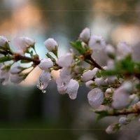 После дождя. :: Наталья Непеина
