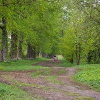 В старом парке :: Татьяна Копосова