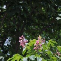 Цветочный хоровод-22. :: Руслан Грицунь
