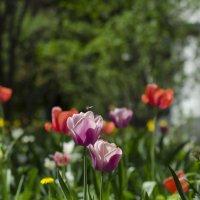Весна в монастырском подворье. :: Любовь