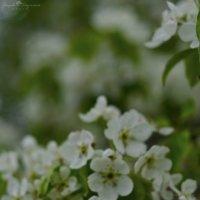 весна :: Анжелика