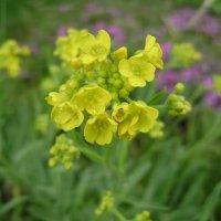 Жёлтые цветочки :: Анатолий