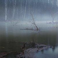 Туманная Серга :: Caша Джус