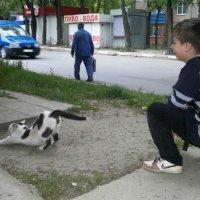 Итог решения погладить..))) :: АЛЛА Смирнова