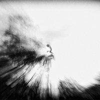 ...в потоках воздуха, :: Лара Leila