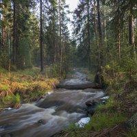 Весенний лес :: vladimir
