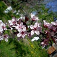 Весна :: Татьяна Пальчикова