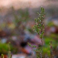 В лесу :: Зоя Ципельштейн