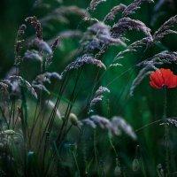 цветочек альнькой :: Лика Охрименко