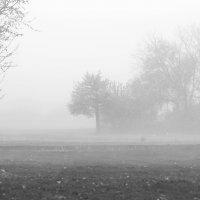 Туманное утро :: Павел Яновский