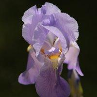Цветочный хоровод-26. :: Руслан Грицунь