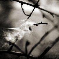 Запутавшаяся лёгкость :: Катерина Чебышева