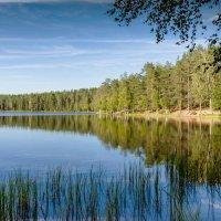 Лесное озеро 1 :: Виталий