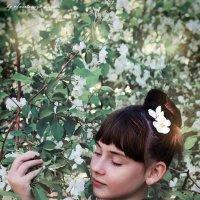 Яблоневый цвет :: Анастасия Лагута