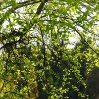 настроение весны :: Руслан Репкин