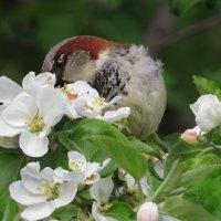 Аромат цветов так манит.. :: Ната Волга