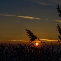 Закат на Финском заливе :: Valeriy Piterskiy