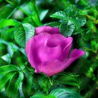 Весенние ароматы :: Мария Богуславская
