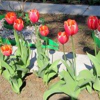 Клумбочка с тюльпанами . :: Мила Бовкун