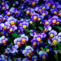 Улыбка цветов :: Alexander