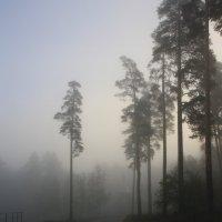 Туман... :: Валерия  Полещикова