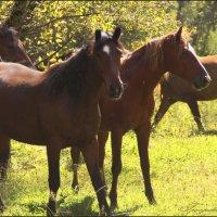 Утренние кони :: Наталия Григорьева