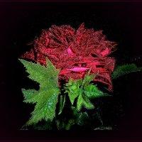 В моей комнате в вазе стоят...На столе темно-красные чудные розы. :: Людмила Богданова (Скачко)