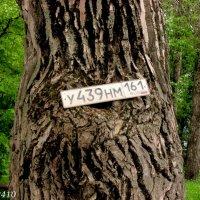 """Пронумерованное"" дерево... :: Нина Бутко"