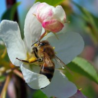 пчелка )) :: Алина Андрейченко