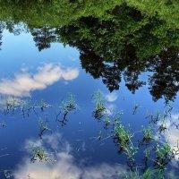 Засмотрелись сосны в зеркало воды... :: Лесо-Вед (Баранов)