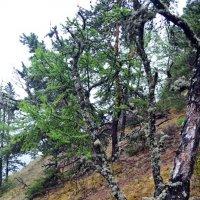 Заколдованный лес :: Ольга