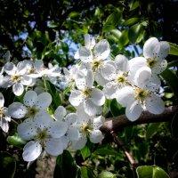 Весна пришла... :: Владимир Бровко