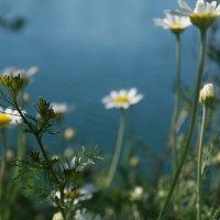 Loking for the summer :: Vladislava Ozerova