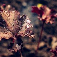 Цветок :: Julia VasilёK