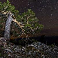 Майская ночь :: Александр Хорошилов