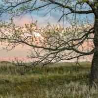 ветка закатного солнца :: Роман Протчев Link Art