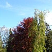 Бук (четыре дерева стоят ) :: laana laadas
