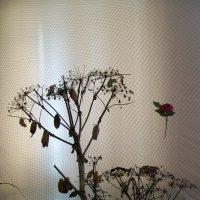 Коконы бабочек :: Инна Буяновская