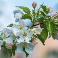 Сады цветут :: Любовь Потеряхина