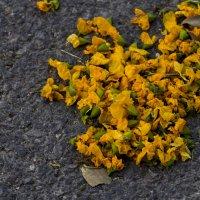 Цветы на асфальте :: Александр Деревяшкин