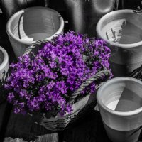 В цветочной лавке :: Elena Ignatova